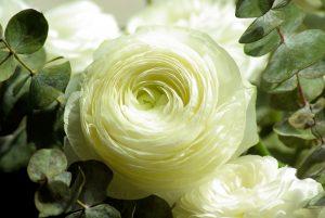 flowers-728811_1920
